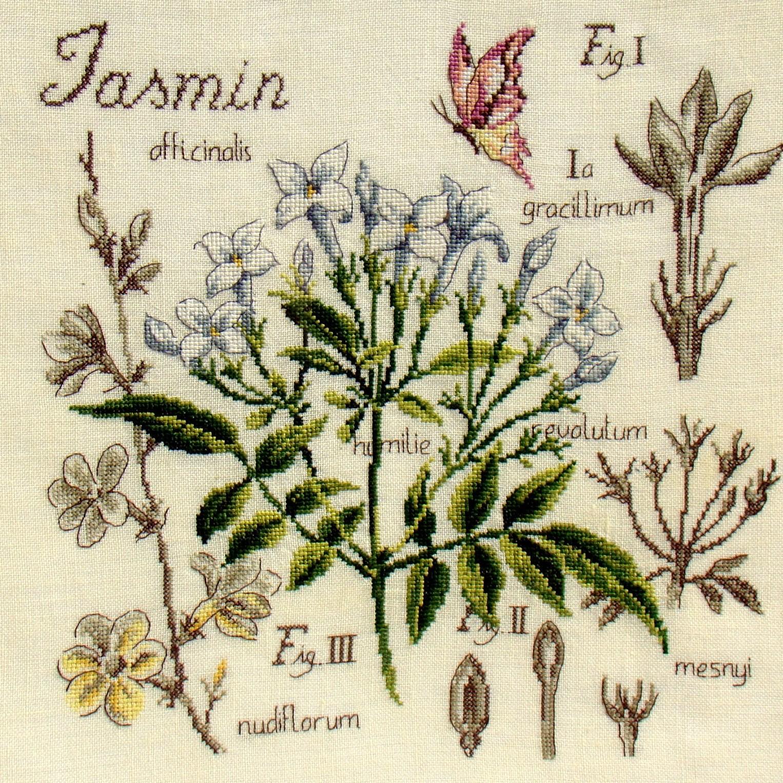 схема таблицы ботаники