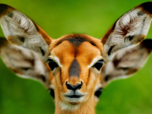 "<img src=""http://4.bp.blogspot.com/-hC-Y_N_wEA0/Uq8J6DJy2MI/AAAAAAAAFl4/52zLvfhIH1c/s1600/vxxx.jpeg"" alt=""Deer wallpapers"" />"
