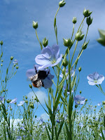 http://textilerawmaterial.blogspot.com/