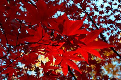 Japanese Maples Festival, Gibbs Gardens