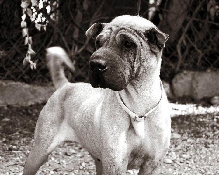 Animales necesitados y sin hogar te estan esperando elige el tuyo zaragoza perros - Perrera de vilafranca ...