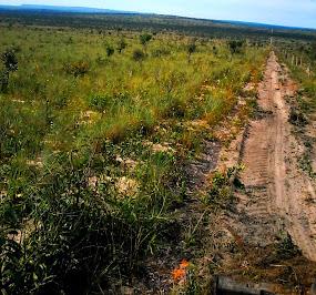 ATENÇÃO: OPORTUNIDADE! Cerrado Campina - Solo Arenoso / Tocantins