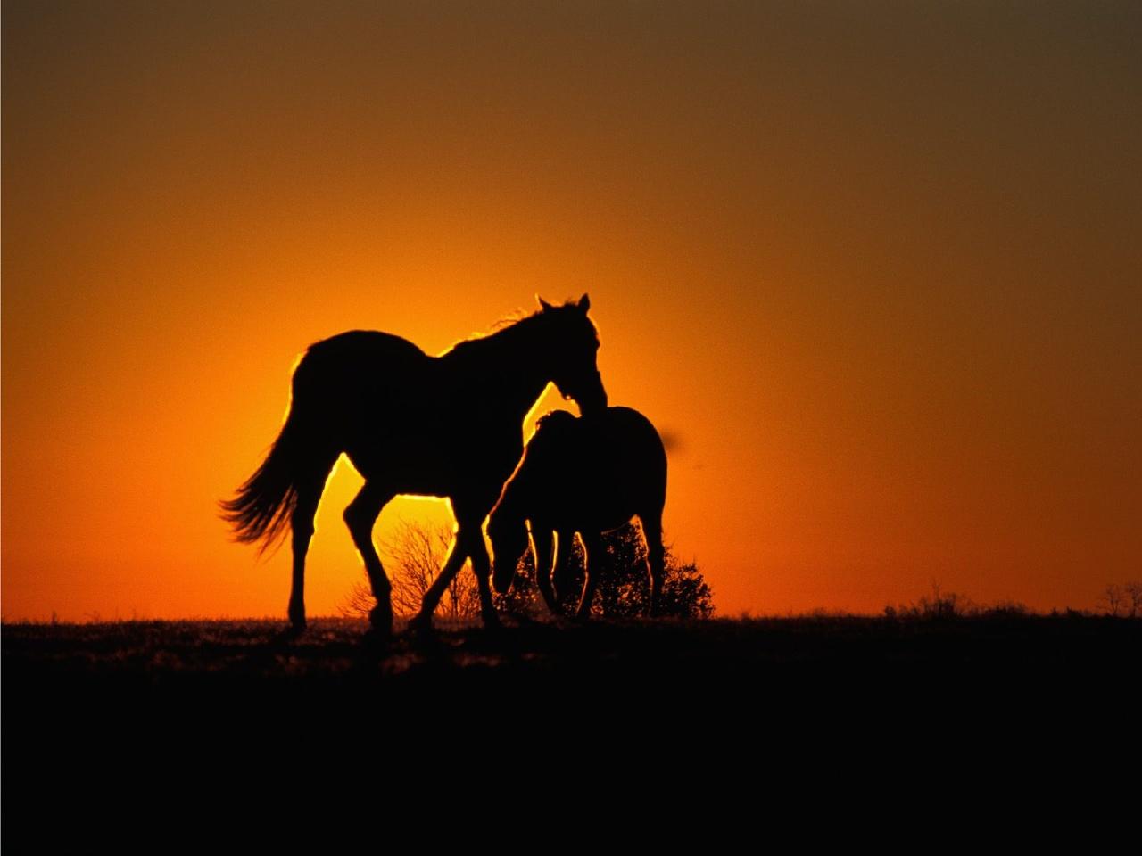 http://4.bp.blogspot.com/-hCOKYi0Q4WY/TxeSayf1vdI/AAAAAAAAIhc/QtOa2WmPqG0/s1600/papeis-de-parede-cavalos-wallpaper+%25288%2529.jpg