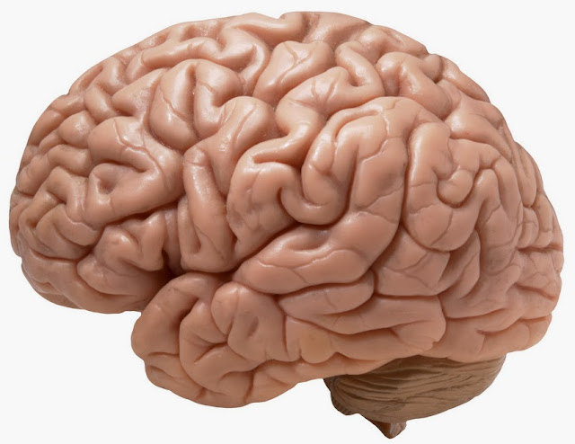 Cerebral, Cerebrum, The most complex object in the universe