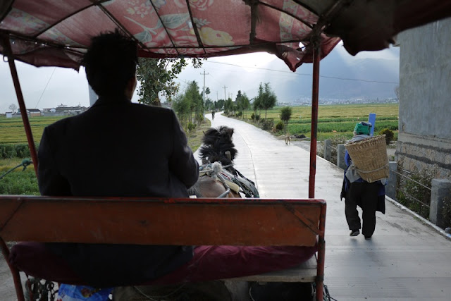 view of road ahead while sitting on a horse cart