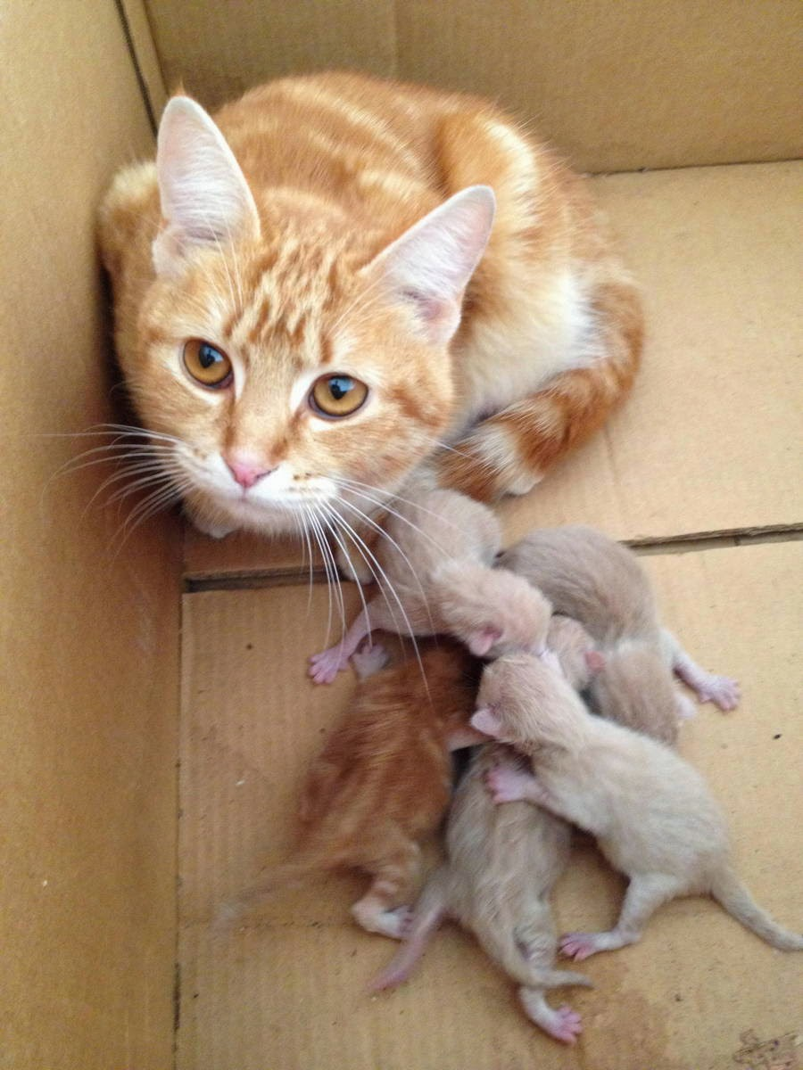 Funny cats - part 95 (40 pics + 10 gifs), cat pictures, mommy cat with her newborn kittens