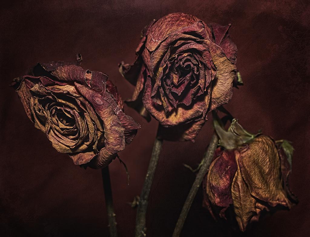 Dead Flowers 3938317132 940d85106a B 3543193074 Cc9cf63cac