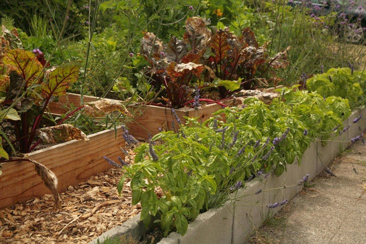 He Started With Some Boxes, 60 Days Later, The Neighbors Could Not Believe What He Built - Cinder blocks are perfect for growing herbs.