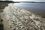 Muertes masivas de animales en el mundo - Fernando Correa