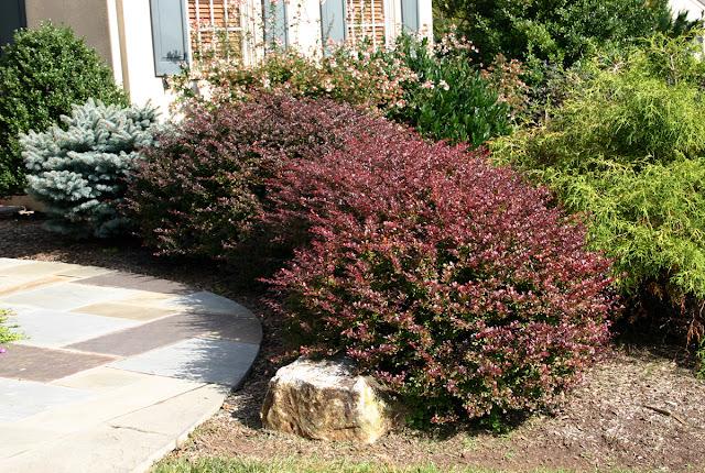 Il mondo in un giardino consigli per la potatura delle siepi - Alberi nani da giardino ...