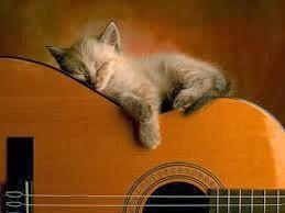 Album hình ảnh đẹp: Những chú mèo con ngủ gật nhiều quá :)