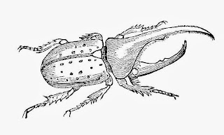 Free Insect Digital Stamps: Antique Illustrations of Earwig and Hercules Beetle