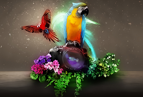 Digital Art Photoshop Tutorial Two Macaw