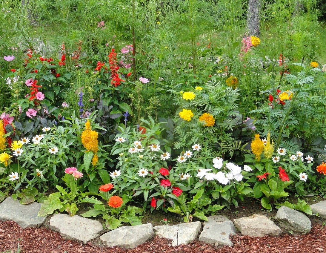 Home Gardening Flowers And Vegetables Ideas Freshnist Design