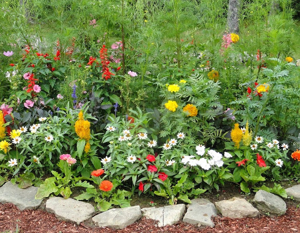 home gardening flowers and vegetables