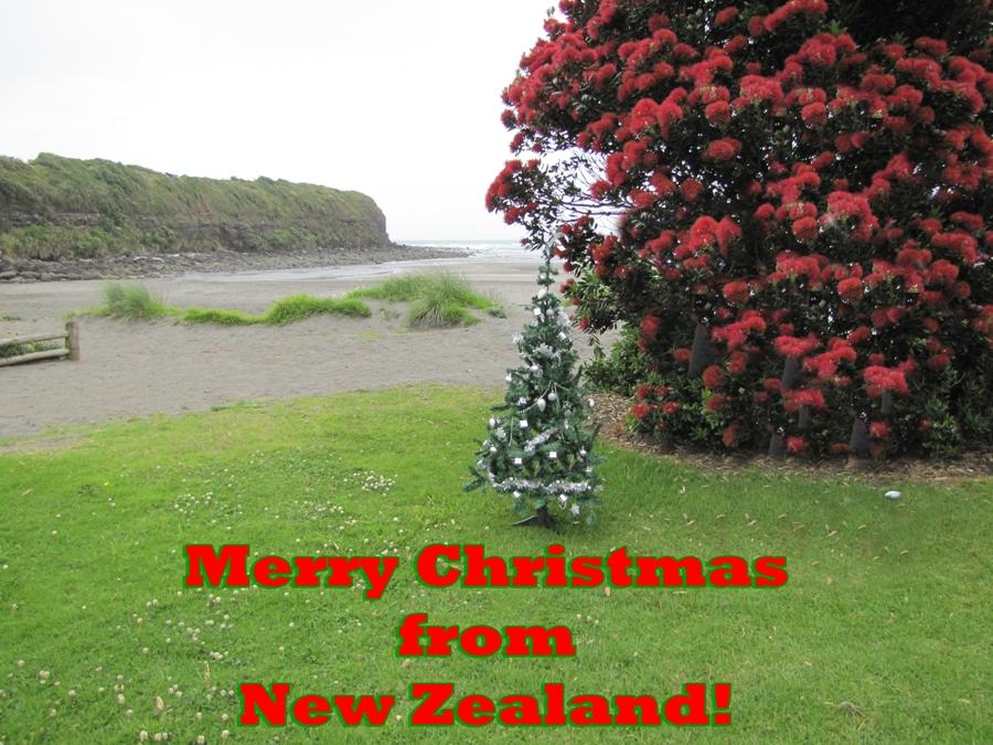 pohutukawa nz christmas tree