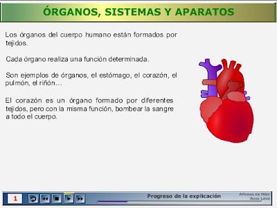Órganos, Sistemas y Aparatos