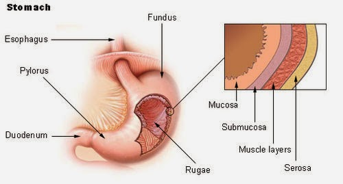 Psychology Of Medicine Serous Membrane
