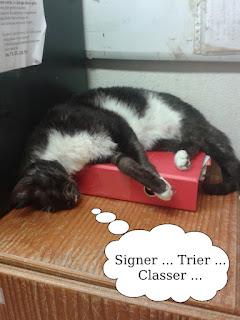 Chat noir et blanc endormi sur un classeur.