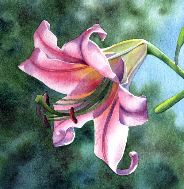 barbara fox daily paintings lily belle sold flower watercolor