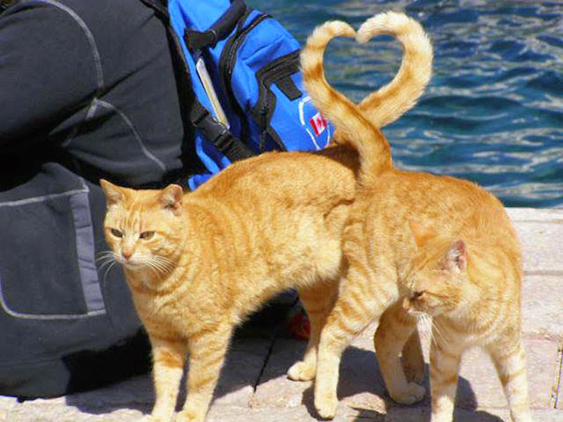 30 Pictures Taken At The Right Moment - Nothing spells love like 2 sweet kitties!