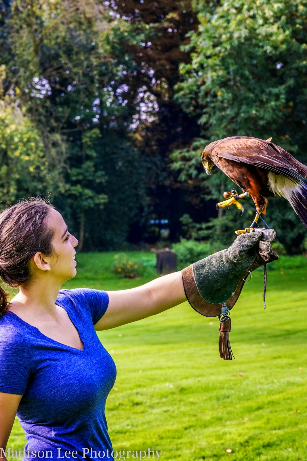 Gypsy Soul To Blame Lavenhan Falconry Is Awesome