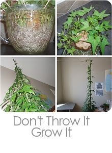 Don't Throw it Grow It