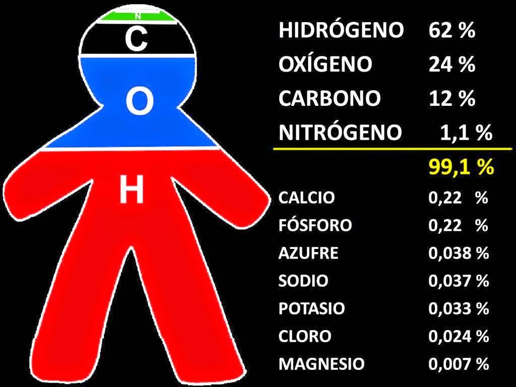 La qumica en la vida cotidiana elementos qumicos en los seres vivos elementos qumicos en los seres vivos urtaz Gallery