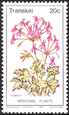 1981 Pelargonium Reuniforme, Medicinal Plant - Republic of Transkei
