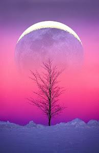 No hay nada que los poetas amen tanto como a la luna... cuajada bajo sus sueños!  Eileen