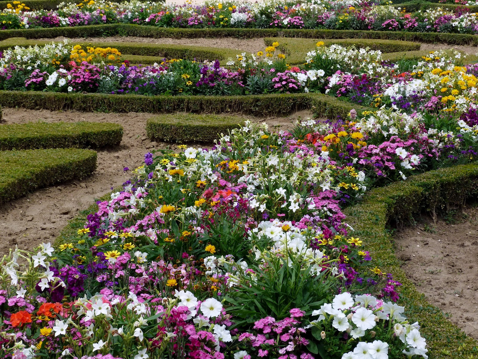 Flowers for flower lovers flowers garden wallpapers for Flower garden