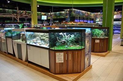 Montar un negocio de mantenimiento de acuarios
