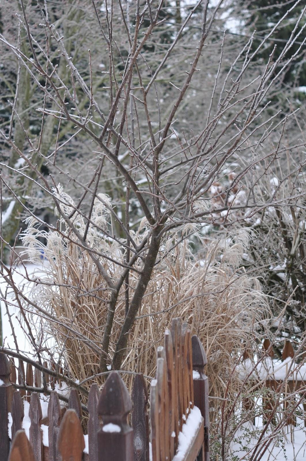 Snow in Portland Oregon