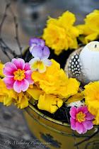 FLOWERS by titti & ingrid