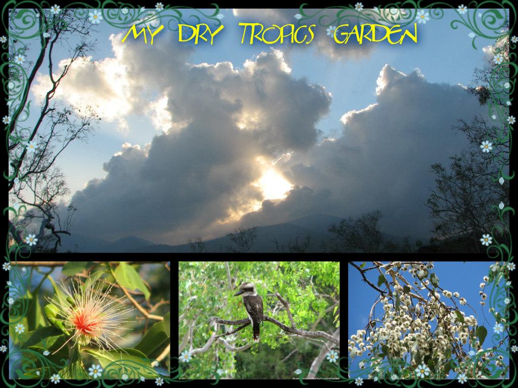 My Dry Tropics Garden