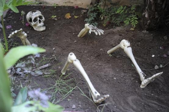 A Temporary Blog Idee Festa Halloween Decori Da Giardino