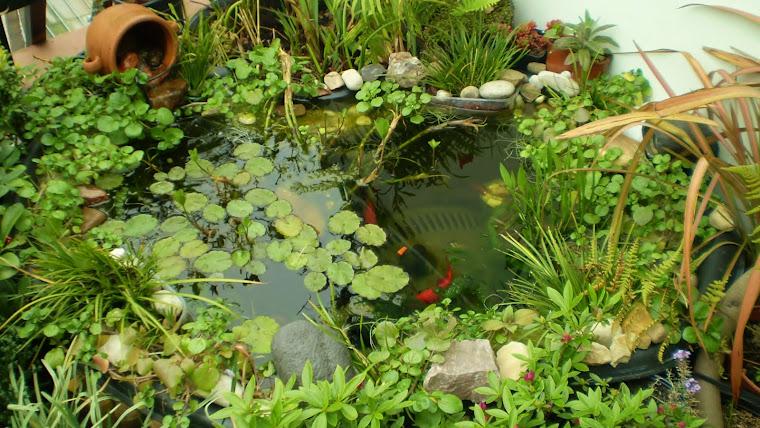 El nuevo estanque