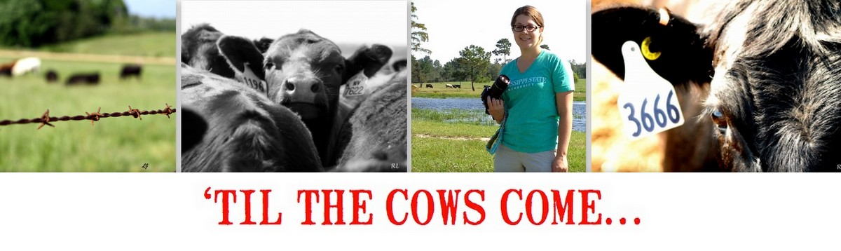 'Til the Cows Come...