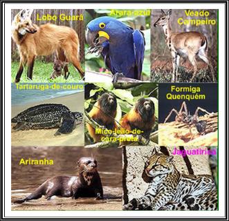 ANIMAIS-EM-EXTINÇÃO-NO-BRASIL