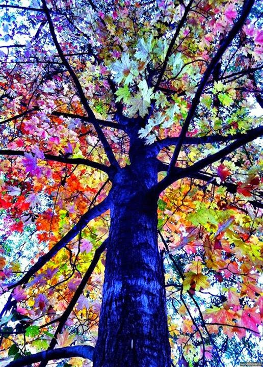 Very Unique And Rare Colorful Trees | HD Wallpapers Update