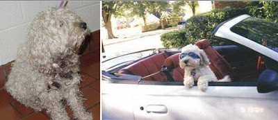 Awesome Animals Pictures Before and After Rescue