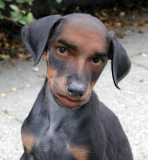 Dog that looks like human