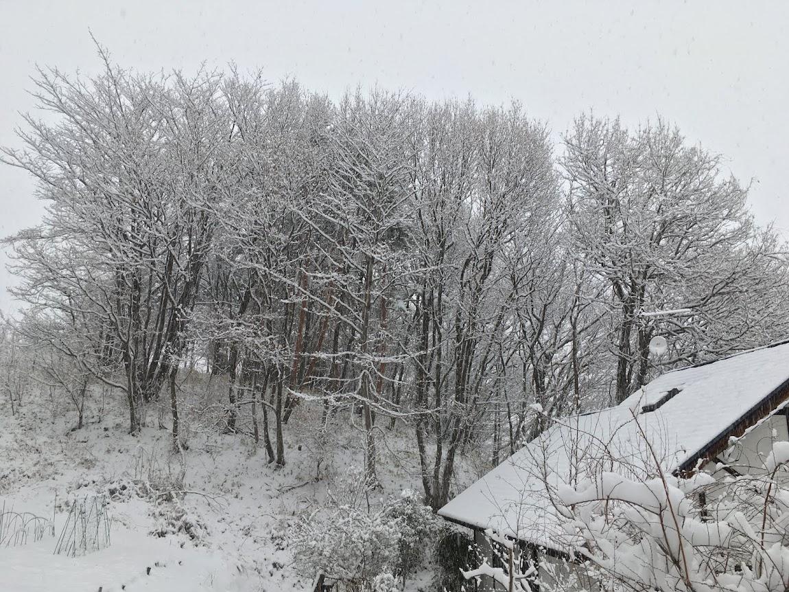 大雪だ~ッ