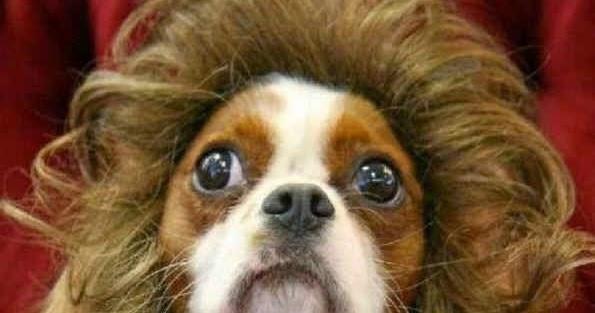 imagens de cachorros e fotos fotos de cachorros engra u00e7ados