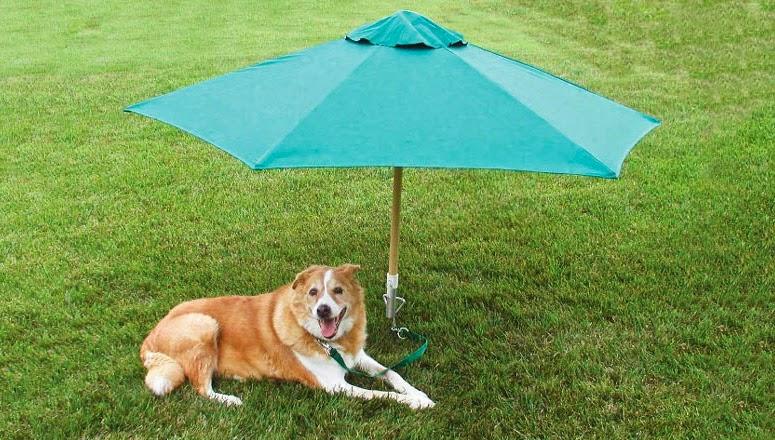 Dog Stake Pets At Home