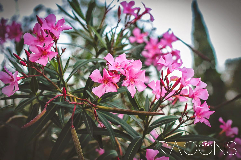 Flora dels Jardins de la Jueva Girona