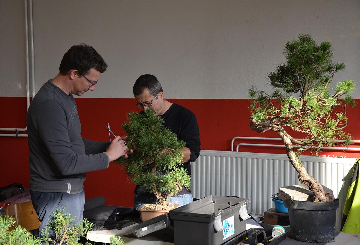 Bonsai Living Art Progetto Futuro With Enrico Savini