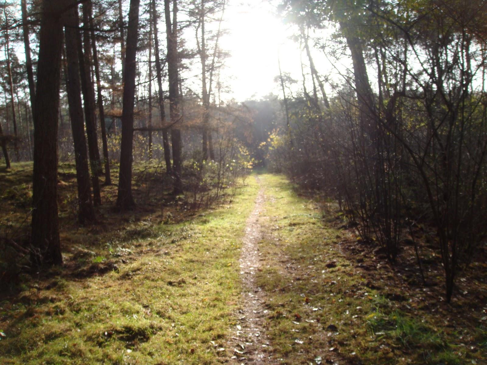 Iwannarun78: open trail klassement utrechtse heuvelrug