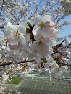 ilgiapponedidaniela@blogspot.com