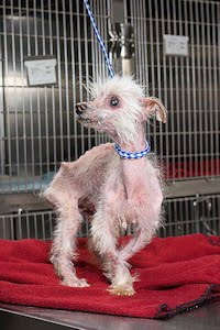 From a puppy mill . . . . . .